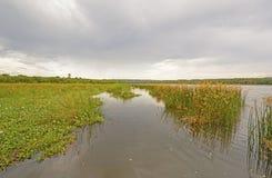 Marshland on a Wild River. Marshland on the Victoria Nile in Uganda royalty free stock images