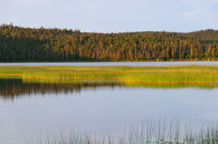 Marshlands in evening light Royalty Free Stock Images