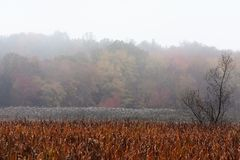 Marshlands in the fall in New England Royalty Free Stock Photos