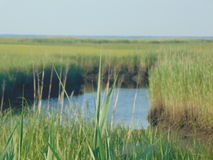 Marshlands. The marshlands, showing clear water surrounded by tall grass stock photo