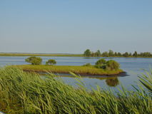 Marshlands. The marshlands, showing clear water surrounded by tall grass royalty free stock photos