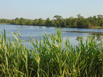 Marshlands. The marshlands, showing clear water surrounded by tall grass stock photography