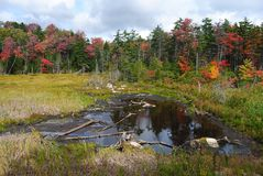 Marshlands in Vermont. Marshlands in Vermont, United States, in fall Royalty Free Stock Photos