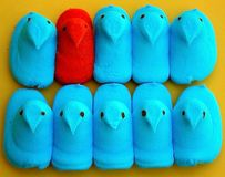 Marshmallow νεοσσοί καραμελών Πάσχας στη σειρά Στοκ εικόνα με δικαίωμα ελεύθερης χρήσης