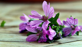 Marshmallow. Bright violet marshmallow flowers on a wooden table Royalty Free Stock Images