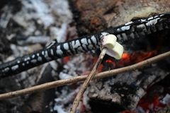 Marshmallow. Campfire with sweet pink-yellow marshmallows Royalty Free Stock Photos