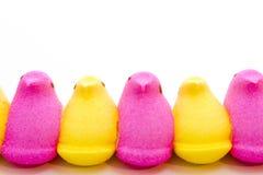 Marshmallow Chicks Stock Photo