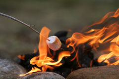 Marshmallow feast. Marshmallow on a stick being roasted over a camping fire Royalty Free Stock Images