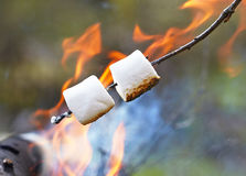 Marshmallow na kiju Zdjęcia Royalty Free