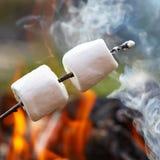 Marshmallow på en pinne Arkivbilder