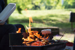 Marshmallow preparation on fire in a park. On a sunny day Stock Image