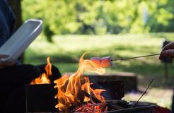 Marshmallow preparation on fire in a park. On a sunny day Stock Images