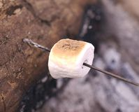 Marshmallow Roasting On A Open Fire Stock Photos