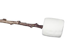 Marshmallow on a stick. A sweet, soft, chewy raw marshmallow on a stick isolated on white Royalty Free Stock Images