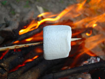 Marshmallow on a stick Stock Image