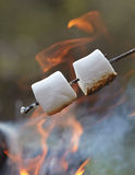 Marshmallow on a stick Stock Images