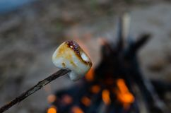 Marshmallow on a twig roasted on a fire stock photos