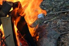 Marshmallower på lägereld Arkivbild