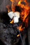 marshmallows ψήσιμο Στοκ Φωτογραφία