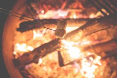 Marshmallows on a campfire  Royalty Free Stock Photos