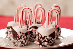 Marshmallows with chocolate dip and candy canes for Christmas Tr Royalty Free Stock Images