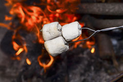Marshmallows over the fire. Roasting marshmallows on a stick over the open fire Royalty Free Stock Images