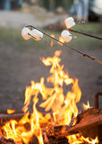Marshmallows. Roasting marshmallows over the campfire Royalty Free Stock Images