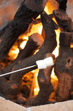 Marshmallows roasting over open fire pit. Marshmallows roasting over open coals in fire pit Royalty Free Stock Photography