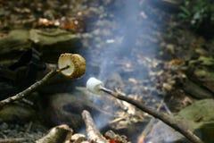 marshmallows stekande Arkivfoton