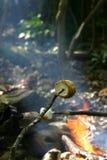 marshmallows stekande Arkivbilder