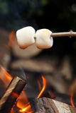 Marshmallows001 Photos libres de droits