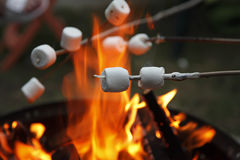 Marshmallows004 Fotografia de Stock