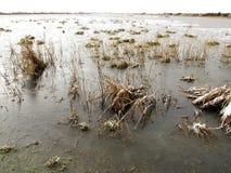 Marshside RSPB Reserve Stock Photos