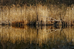 Marshy abstract   in the north Stock Photos