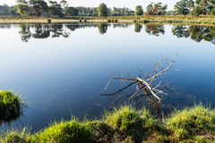 Marshy area with a branch in the  water Stock Images