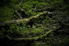 Marshy area Stock Images