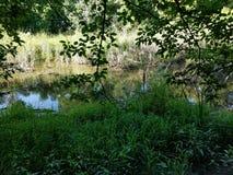 Marshy bagna w drewnach wśród Sertoma parka zdjęcia royalty free