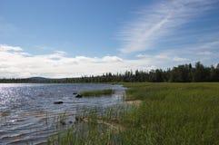 Marshy coast of the northern lake. Stock Image
