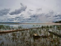 Marshy Grasses near Grand Prism Geyser in Yellowstone National Park, Wyoming. Marshy grasses in still water near Grand Prism Geyser in Yellowstone National Park royalty free stock photo