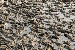 Marshy ground Royalty Free Stock Photography