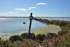 Marshy krajobraz Zdjęcie Royalty Free