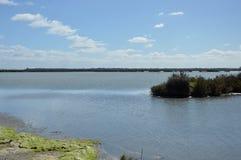 Marshy krajobraz Zdjęcia Royalty Free