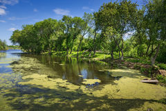 Marshy lake. In the countryside Royalty Free Stock Image