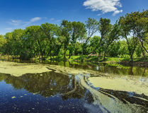 Marshy lake. In the countryside Stock Images