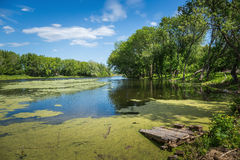 Marshy lake. In the countryside Royalty Free Stock Photo