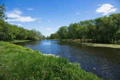 Marshy lake. In the countryside Royalty Free Stock Images