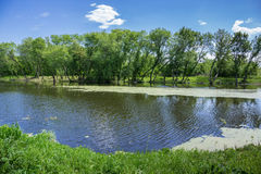 Marshy lake. In the countryside Stock Photos