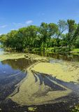 Marshy lake. In the countryside Stock Photography