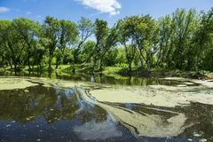 Marshy lake. In the countryside Stock Image