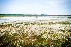 Marshy landscape -vintage Royalty Free Stock Photo